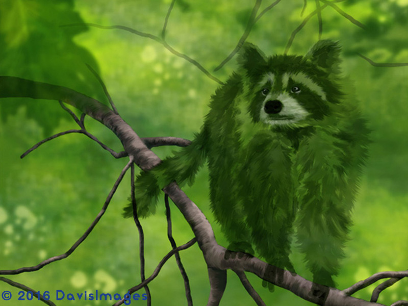 Forest Ghost - Raccoon